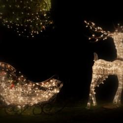 Rudolf the 'lightbulbs' reindeer!