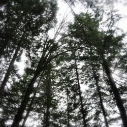 The trees along the trail