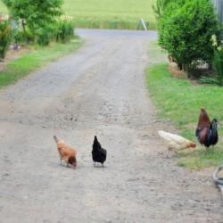 A typical farm scene