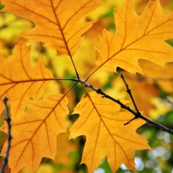Browny leaves