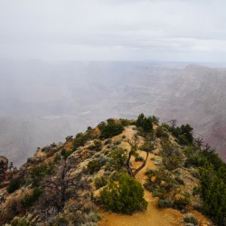 Grand Canyon, sooo foggy in the morning, luckily afternoon became very clear.