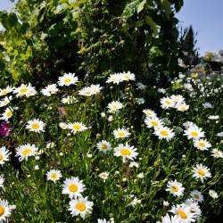 Flowers, flowers, flowers....